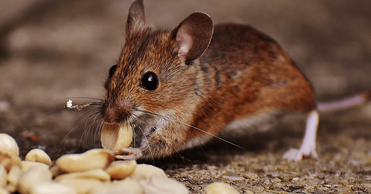 How to Handle Periods of Feast and Famine as a Pest Control Service Provider